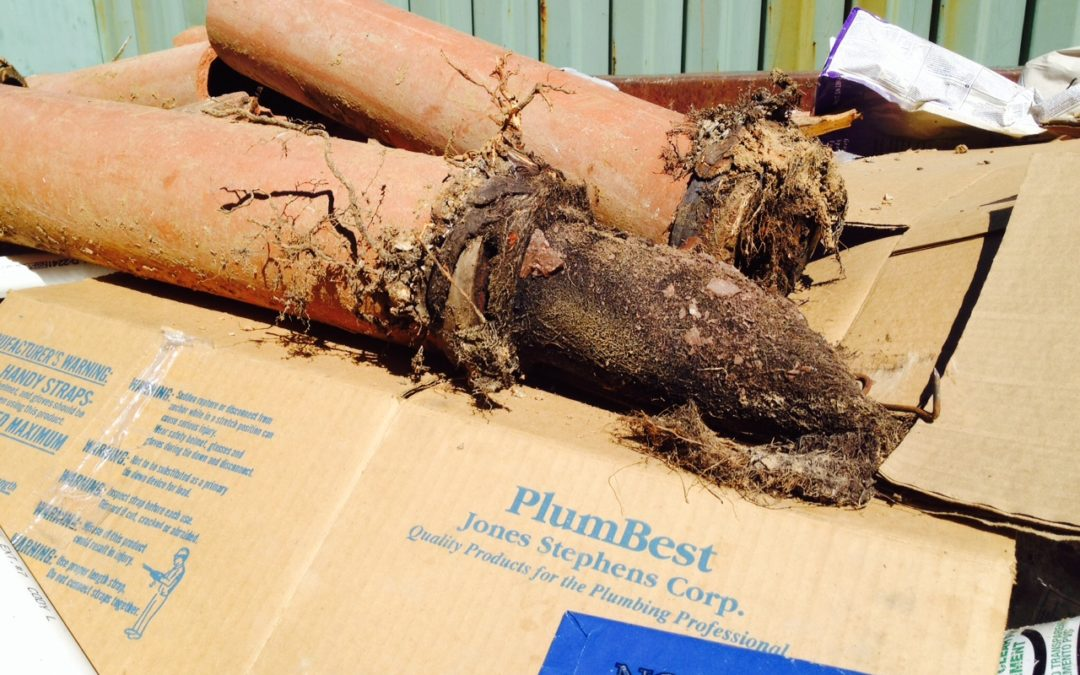 Do you need a Louisville KY Plumber to remove roots from your sewer pipes?
